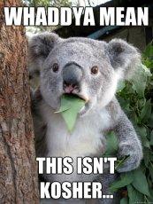 koalakosher