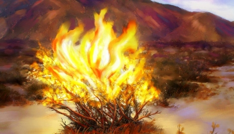 Burning-Bush-610x351.jpg